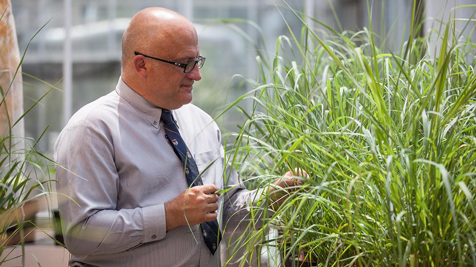 UT-ORNL Governorís Chair for Biorefining Arthur Ragauskas.